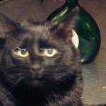 Kittys magische Augen